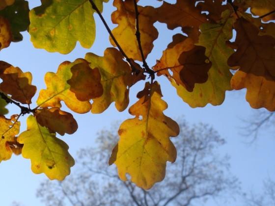 blauer Himmel und Herbstblätter