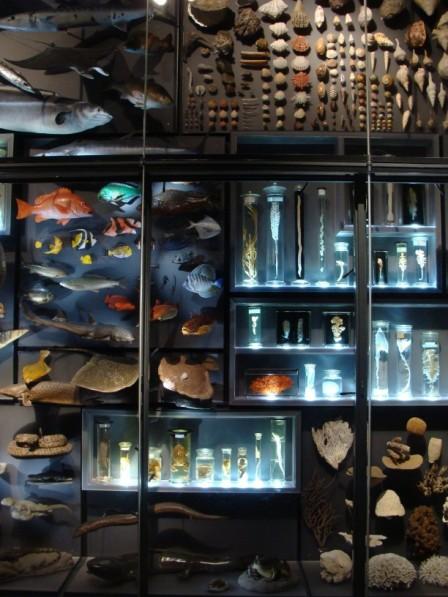 Naturkundemuseum Berlin Ausstellung