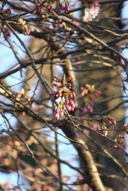 Frühjahrsblüten